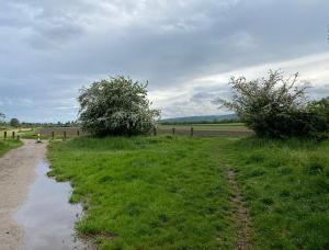 Links ein schmaler Weg mit Pfütze, rechts Gras und Bäume und bewölkter Himmel