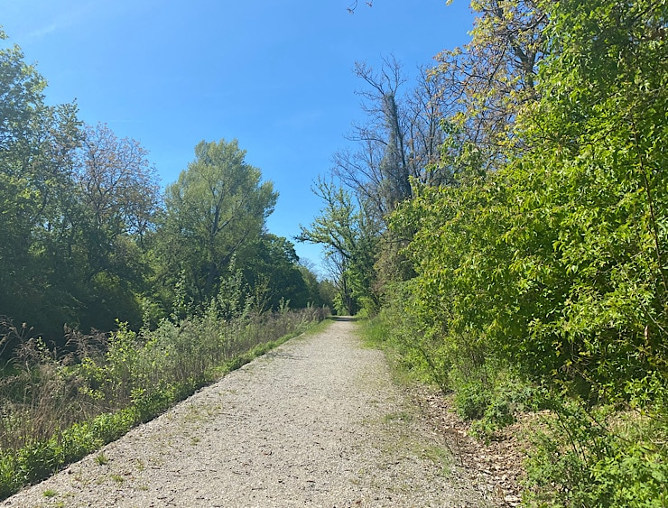 Ein schöner Weg, blauer Himmel und auf beiden Seiten Bäume mit schönen grünen Blättern.